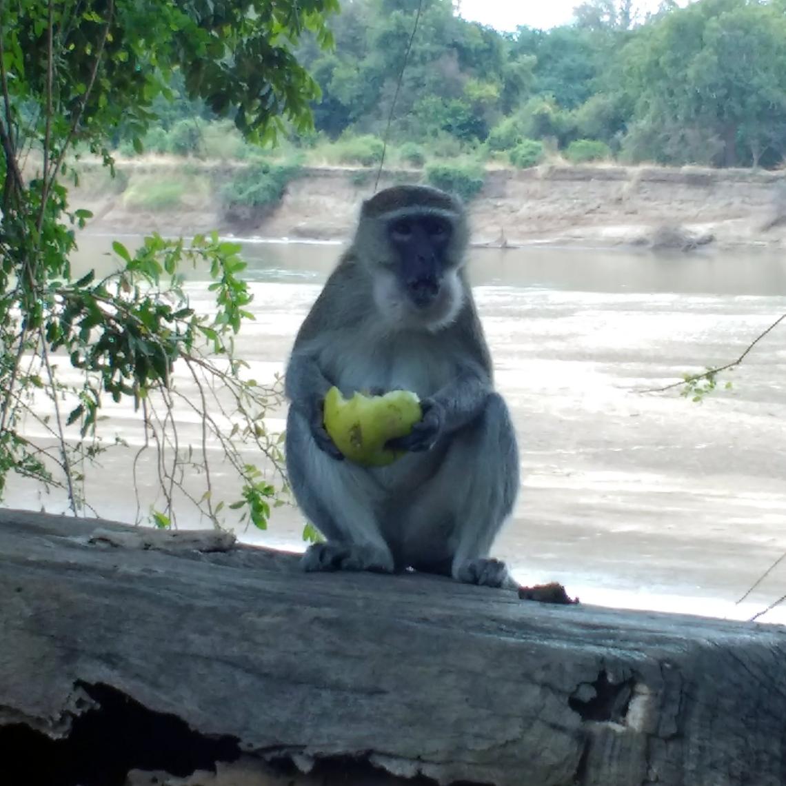 monkey-eating.jpg